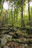 Rocky Lush Green Great Smoky-Bergpark royalty-vrije stock foto