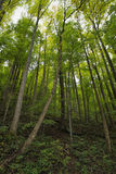 Rocky Lush Green Great Smoky Mountain Forest Stock Photos