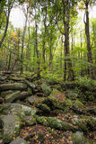 Rocky Lush Green Great Smoky Mountain Park Royalty Free Stock Photo