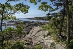 Rocky Maine Coastline Through träden fotografering för bildbyråer