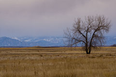 Rocky Mountain Arsenal National Wildlife Refuge. Near Denver, Colorado.  The Wildlife Refuge is home to Deer, Elk, and even a small herd of Bison Stock Photography