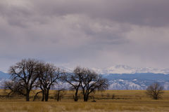 Rocky Mountain Arsenal National Wildlife Refuge. Near Denver, Colorado.  The Wildlife Refuge is home to Deer, Elk, and even a small herd of Bison Stock Images