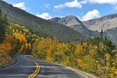 Rocky Mountain Aspen Imagen de archivo libre de regalías