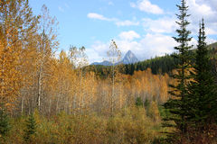 Rocky Mountain autumn Royalty Free Stock Photography