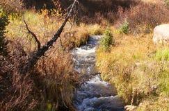 Rocky Mountain Autumn Brook foto de stock royalty free