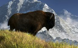 Rocky Mountain Buffalo stock illustration