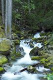 Rocky Mountain Creek Royalty Free Stock Photos