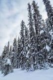 Rocky Mountain dichtbij Meer Louise Royalty-vrije Stock Afbeeldingen