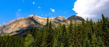 Rocky Mountain a entouré par des pins Photos stock