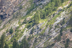 Rocky Mountain Face Imagenes de archivo