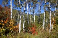 Rocky Mountain Fall Stock Photo