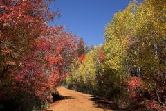 Rocky Mountain Fall Royalty Free Stock Photos