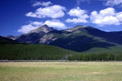 Rocky Mountain Field royalty free stock photography
