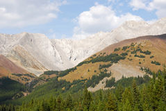 Rocky mountain and forest Stock Photography