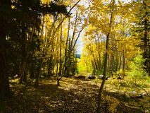 Rocky Mountain Forest in September stock foto