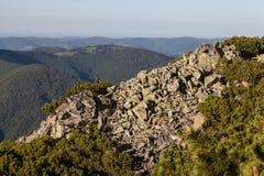 Rocky Mountain Hill och sörjer trädfilialer Royaltyfria Foton