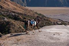 Rocky Mountain with horse Royalty Free Stock Photos