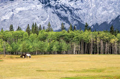 Rocky Mountain Meadow Royalty Free Stock Images