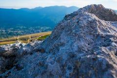 Rocky Mountain Meadow In Summer Fotografia de Stock