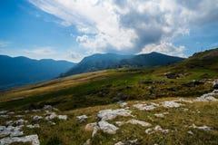 Rocky Mountain Meadow In Summer Foto de Stock