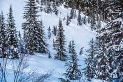 Rocky Mountain nahe Lake Louise Lizenzfreies Stockbild