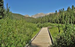 Rocky Mountain National Park Boardwalk. A boardwalk crosses a wetland area along a hiking trail at beautiful at Rocky Mountain National Park near Estes Park stock images