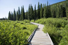 Rocky Mountain National Park. A boardwalk gives access to a wetland area in Rocky Mountain National Park, Colorado Royalty Free Stock Photography