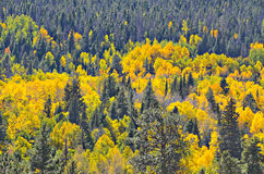 Rocky Mountain National Park. Colorful autumn in Rocky Mountain National Park, Colorado Stock Photography
