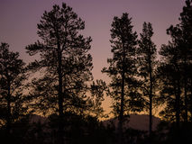 Rocky Mountain National Park. This is a morning picture of some pine trees in Rocky Mountain National Park stock images
