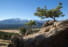 Rocky Mountain National Park. Small trees on a rocky cliff at Rocky Mountain National Park, Colorado Royalty Free Stock Images