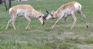 Rocky Mountain National Park snöplats Fotografering för Bildbyråer
