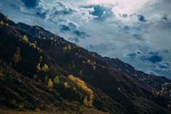 Rocky mountain overgrown with yellow trees against the cloudy autumn sky is illuminated by the rays of the setting sun. Majestic fall landscape royalty free stock image