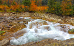 Rocky mountain river in autumn. Multi-color wood Royalty Free Stock Images