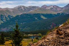 Rocky Mountain Scene di stupore con la marmotta Fotografia Stock Libera da Diritti