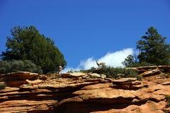 Rocky Mountain sheep  against bright blue sky Stock Photo