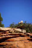 Rocky Mountain sheep and blue sky Royalty Free Stock Photos