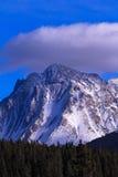 Rocky Mountain Sheep juvénile appréciant le soleil ! Photo libre de droits