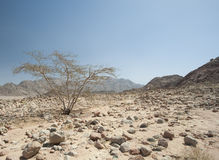 Rocky mountain slope in a desert Stock Images