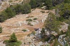 Rocky mountain slope with rare trees. Andorra Royalty Free Stock Photo
