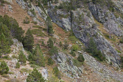 Rocky mountain slope with rare trees. Andorra Royalty Free Stock Images