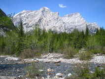 Rocky Mountain Spring Stock Image