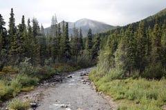 Rocky Mountain ström inom Denali fotografering för bildbyråer