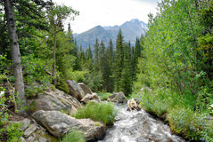 Rocky Mountain Stream Stock Photo