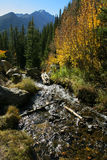 Rocky Mountain stream. Stream flowing through the autumn aspens, Rocky Mountain National Park, Colorado Royalty Free Stock Image