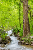 Rocky mountain stream. A stream flowing through the rocky mountains in Colorado Stock Photos