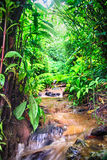 Rocky mountain stream in a Nepal rain forest Royalty Free Stock Photography