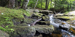 Rocky Mountain stream Stock Photography