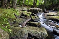 Rocky Mountain stream Stock Photos
