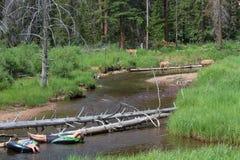 Rocky Mountain Tubing Royalty Free Stock Photography