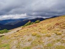 Rocky Mountain Tundra in Colorado stock fotografie